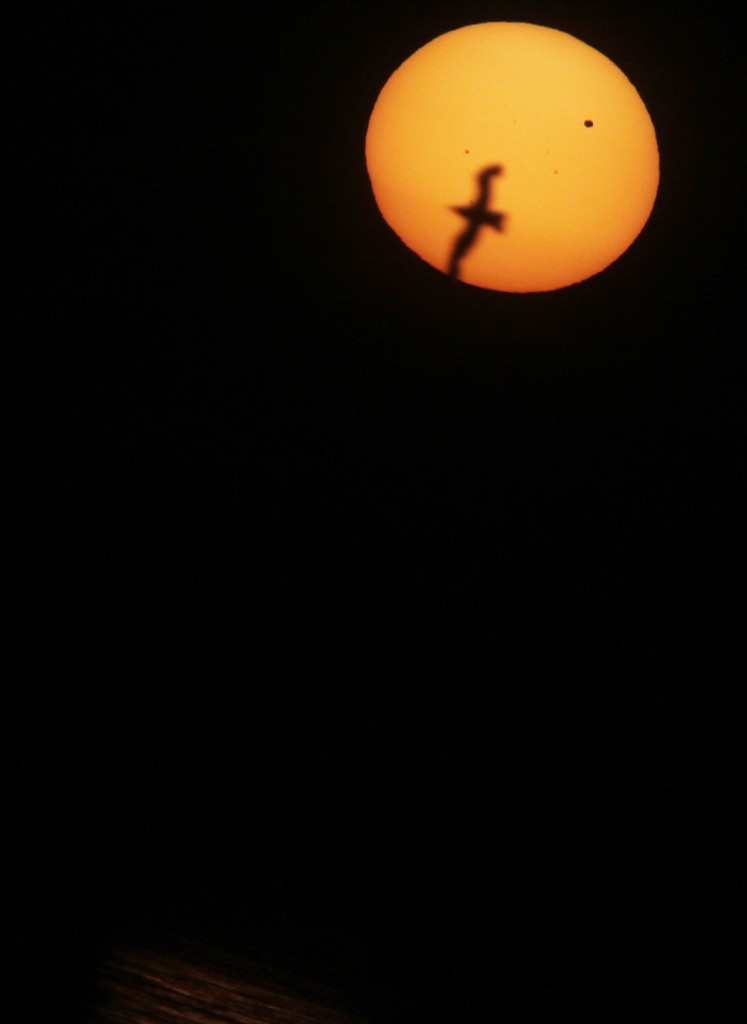 bird_sunset_on_lake_erie_venus_transit_point_pelee_peter_mcmahon