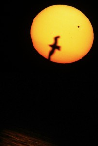 point-pelee-bird_sun_venus_transit_sunset_lake_erie_reflection